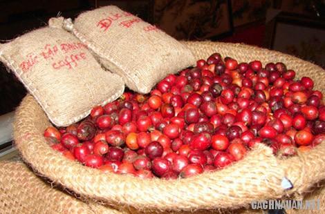 mon an dac san dac nong 6 - 10 món đặc sản ngon nổi tiếng của tỉnh Đắc Nông
