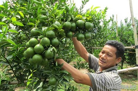 mon an dac san dac nong 8 - 10 món đặc sản ngon nổi tiếng của tỉnh Đắc Nông