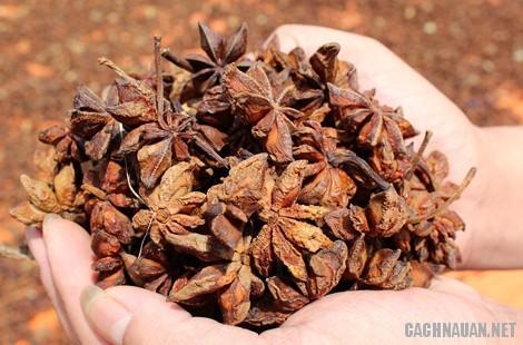 mon an dac san lang son 8 - 10 món ăn đặc sản nổi tiếng của tỉnh Lạng Sơn