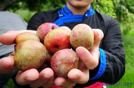mon an dac san lao cai 12 - 10 món đặc sản Lào Cai nổi tiếng không nên bỏ lỡ
