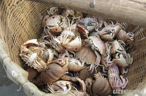 mon an dac san quang ngai 7 - 10 món ăn đặc sản nổi tiếng của tỉnh Quảng Ngãi