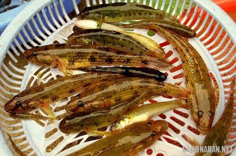 mon an dac san quang ngai - 10 món ăn đặc sản nổi tiếng của tỉnh Quảng Ngãi